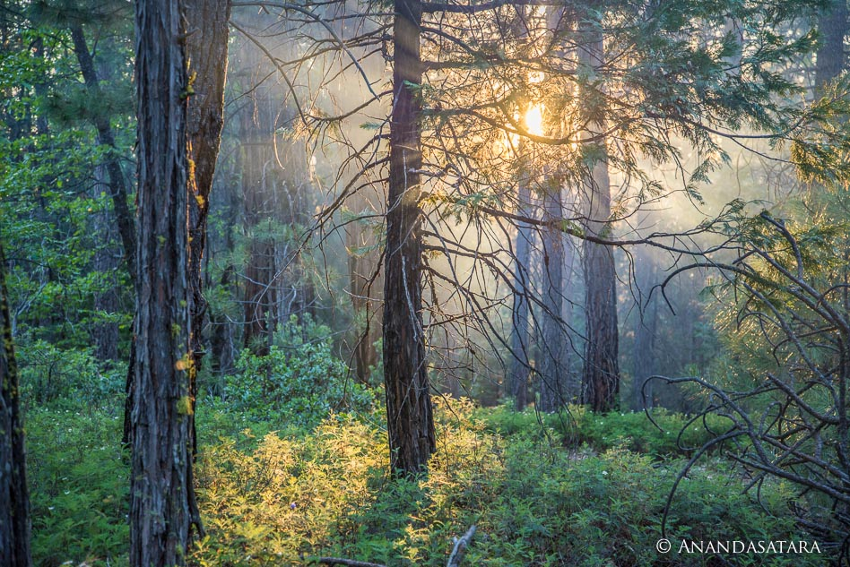 """Light Source"" Stanislaus National Forest, California, June 2013"