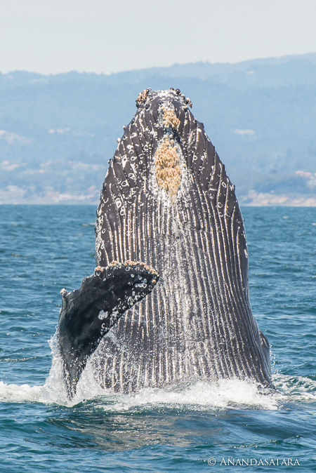 soul ascension enlightenment humpback whale vertical