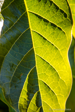 soul awakening ascension leaf