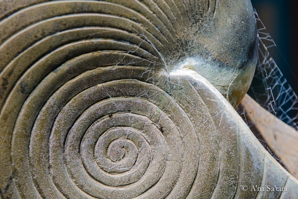 Spiral shell art