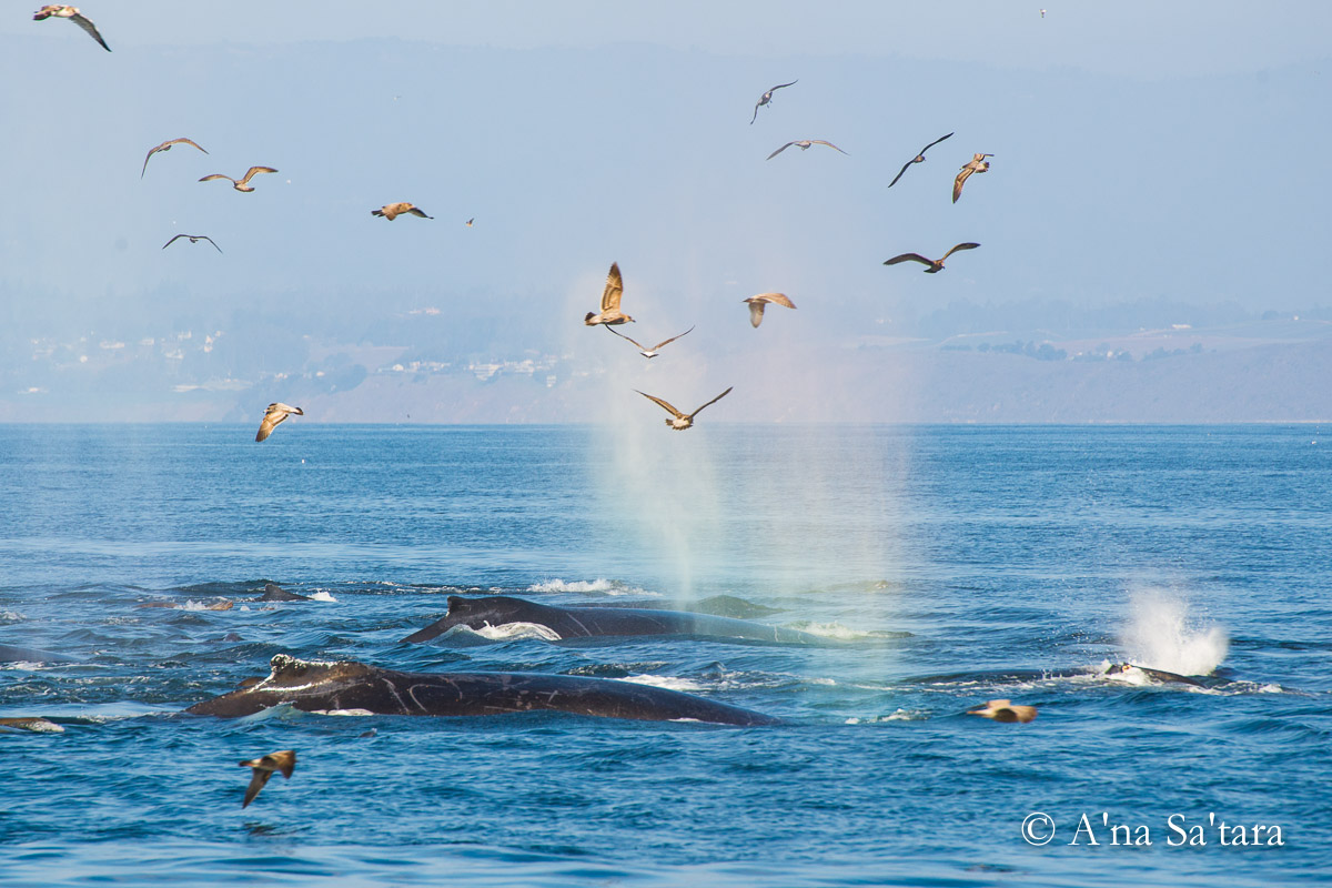 Humpback Whale Soul Awakening