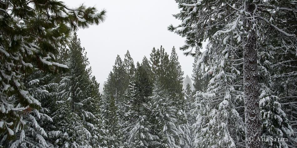 Mount Shasta ley line