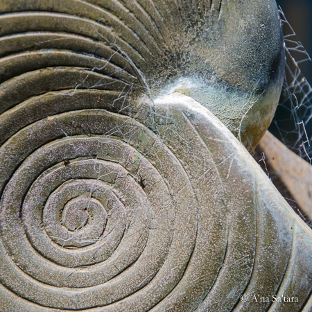 Spiritual Love Circles