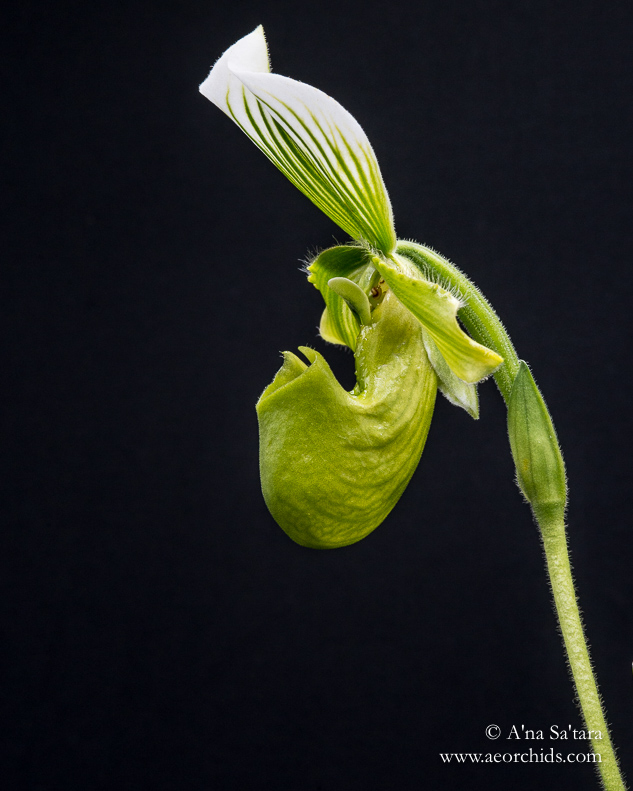 Orchid Photography